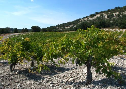 Wijngaard Hacienda Monasterio